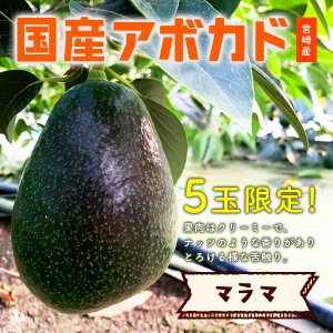 【5玉限定!】横山果樹園の「マラマ(国産アボカド)1玉」ギフト箱入り|yao800