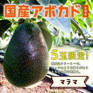 横山果樹園 国産アボカド マラマ