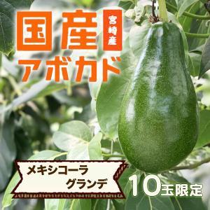 【10玉限定】横山果樹園の「メキシコーラグランデ(国産アボカド)1玉」ギフト箱入り|yao800