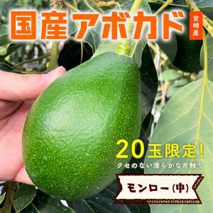 【20玉限定!】「モンロー(国産アボカド)中サイズ1玉」ギフト箱入り|yao800