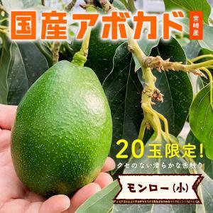 【20玉限定!】「モンロー(国産アボカド)小サイズ1玉」ギフト箱入り|yao800