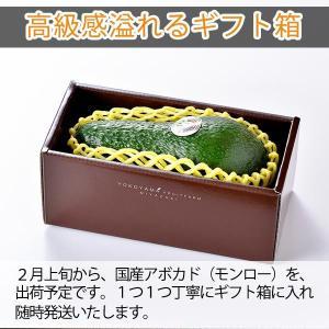 【5玉限定!】横山果樹園の「モンロー(国産アボカド)1玉」ギフト箱入り|yao800|03