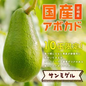 横山果樹園の「サンミゲル(国産アボカド)1玉」ギフト箱入り|yao800