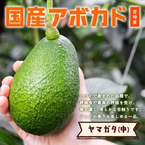 横山果樹園の「ヤマガタ(国産アボカド)1玉」ギフト箱入り|yao800