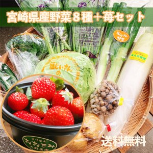 苺/野菜セット 1回便 野菜8種+苺(220g) 送料無料|yao800
