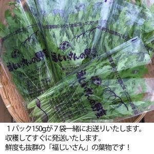 福じいさんの野菜【水菜】宮崎県綾町産水菜 150g*7袋|yao800