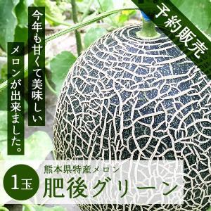 熊本県産メロン 肥後グリーン 1玉 予約販売 送料無料 ギフト プレゼント 贈答品  父の日 お中元|yao800