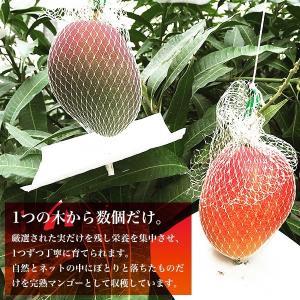 宮崎完熟マンゴー 2個セット 3Lサイズ 送料無料 ギフト プレゼント 贈答品 母の日、父の日 yao800 02
