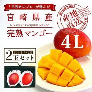 宮崎完熟マンゴー 2個セット 4Lサイズ ギフト プレゼント 贈答品 母の日、父の日|yao800