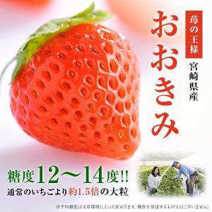 【イチゴの王様】おおきみ|yao800