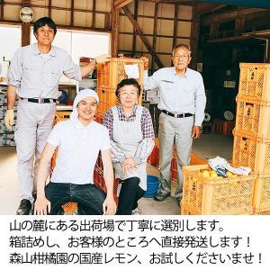 国産レモン【5kg】 日南産マイヤーレモン直径4cm以上 ※ノーワックス|yao800|06