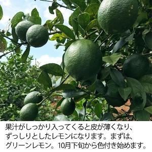 訳あり国産レモン【5kg】 日南産マイヤーレモン(サイズ混合) ※ノーワックス|yao800|04