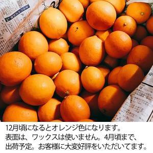 訳あり国産レモン【5kg】 日南産マイヤーレモン(サイズ混合) ※ノーワックス|yao800|05