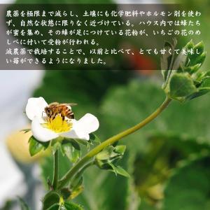 【宮崎県産イチゴ3種食べ比べセット】おおきみ、さちのか、恋みのり|yao800|03