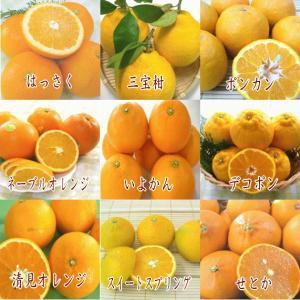 送料無料【フルーツ福袋】旬のフルーツギフトセット/うれしい福袋|yaoya-kisyu|03