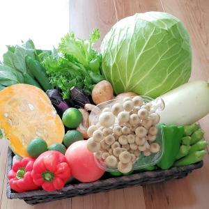 和歌山から旬の野菜を詰め合わせた(野菜セット)10種以上/送料無料|yaoya-kisyu|02