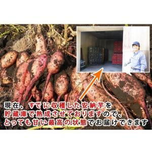 安納芋 4kg入り 送料無料 2セット以上のご購入で、新鮮野菜のおまけ 焼き芋 に最適な 蜜芋 yaoyamato 04