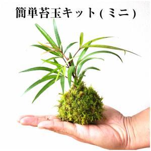 苔玉の作り方 父の日 苔玉キット ミニ 500えん 送料無 ポイント消化 手作り 初心者 セット