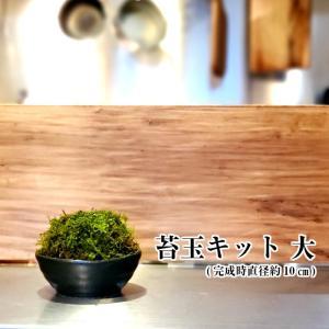苔玉の作り方 苔玉キット 大  手作り キット 初心者 材料 説明書付