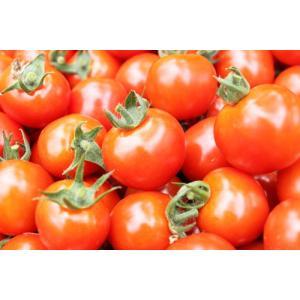 とくちゃんのミニトマト2.5kg(S〜Lサイズ)バラ詰
