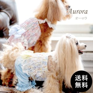Glamourism(グラマーイズム)Aurora ゆうパケット送料無料|ykozakka