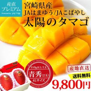 宮崎マンゴー 太陽のタマゴ 青秀 4Lサイズ (510g以上)×2玉 宮崎県