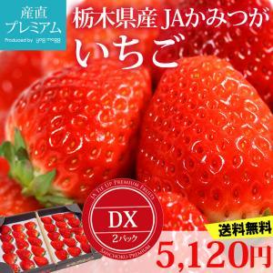 イチゴ とちおとめ DX 2パック 栃木県