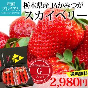 いちご スカイベリー G 2パック(約300g/1パック) 栃木県