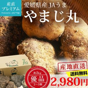 山芋 やまじ丸 優品 約2kg 3〜5個 愛媛県 山の芋