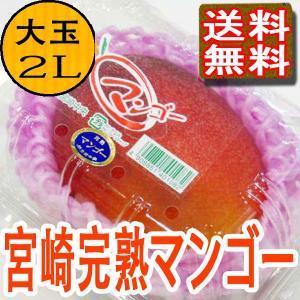 宮崎マンゴー 宮崎県産 完熟マンゴー 2Lサイズ1玉PC入り...