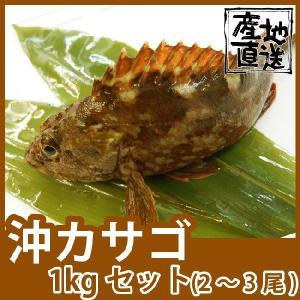 天然鮮魚五島灘沖カサゴ(沖かさご)200〜300g 計1kg 九十九島鮮魚 yokasakana