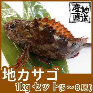 天然鮮魚カサゴ(アラカブ)1kg(1尾150g前後) 和・洋、様々な料理に合います 九十九島鮮魚|yokasakana