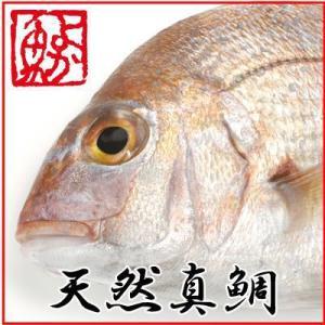 ギフト 長崎産天然真鯛 (釣りもの一級品・活もの) 2.5kg前後 1尾・4〜6人前 yokasakana
