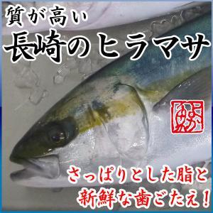 養殖ヒラマサ(平政) 計8kg前後(4kg前後2尾) 送料無料!さっぱりした脂と新鮮な歯ごたえ! 九十九島鮮魚|yokasakana