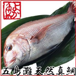 ギフト 長崎産天然真鯛 (釣りもの一級品・活もの) 1.2kg前後 1尾・2〜3人前
