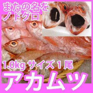 天然高級鮮魚 アカムツ (のどぐろ) 1kg前後1尾 脂の滴るとろける旨さの高級魚をご自宅で 九十九島鮮魚 yokasakana
