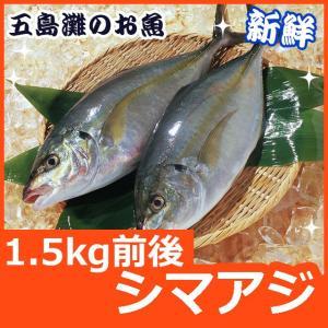 ギフト 長崎産シマアジ(縞鯵)1〜2尾 計1.5kg前後 活もの/お刺身用しまあじ 九十九島鮮魚|yokasakana