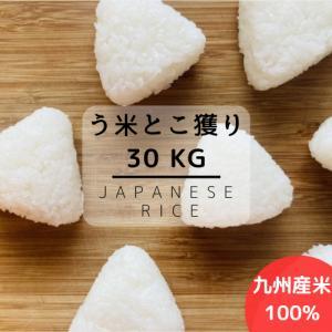 【送料無料】数量限定 生活応援価格 平成29年産 九州産米 ...