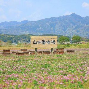 養命酒製造 はちみつのお酒(250ml 14度)|yomeishu-onlineshop|05