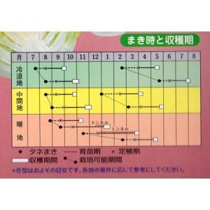 ★送料90円メール便OK★【ロメインレタス】ロ...の詳細画像1