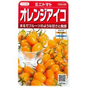 【ミニトマト】オレンジアイコ【サカタ交配】 (13粒)春まき野菜種