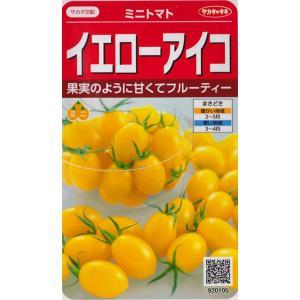 【ミニトマト】イエローアイコ【サカタ交配】(13粒)野菜種[春まき]920105