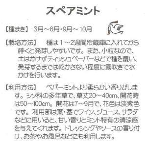 【ハーブの種】スペアミント【藤田種子】(0.2ml)【多年草】[春まき][秋まき]|yonezawaengei|02
