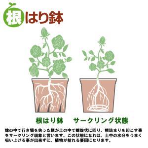 根はり鉢 10号 プラ鉢の詳細画像4