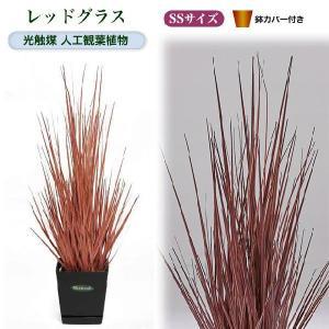 光触媒人工観葉植物SS レッドグラス鉢カバー付|yorozuya-souko