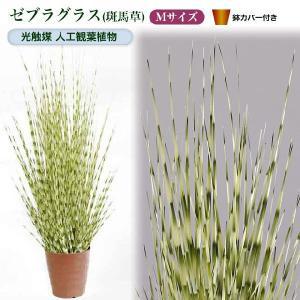 光触媒人工観葉植物M ゼブラグラス(斑馬草)鉢カバー付|yorozuya-souko