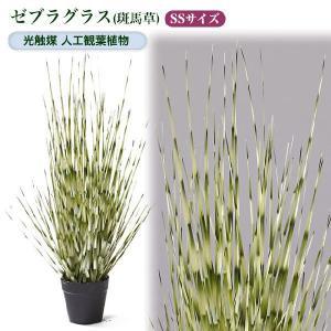 光触媒人工観葉植物SS ゼブラグラス(斑馬草)|yorozuya-souko