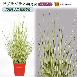 光触媒人工観葉植物SS ゼブラグラス(斑馬草)鉢カバー付|yorozuya-souko
