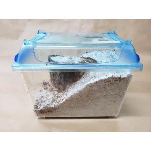 天然カワラ材入り 菌床産卵セット カワラタケ菌糸(材縦置き) 家殖床【クワガタ用】