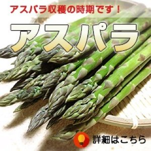 (送料無料) 北海道産 朝採り グリーンアスパラ <秀品 2L〜Mサイズ混合 1kg> 農家直送 ようてい山麓 ルスツ産 アスパラ